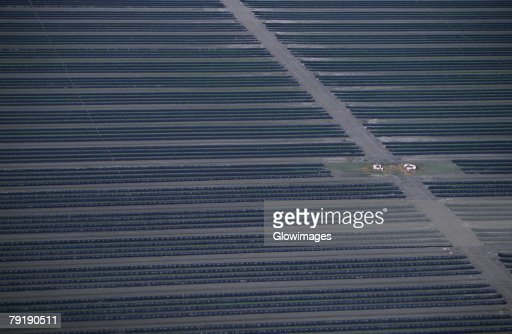 Aerial of strawberry farm, Florida : Foto de stock