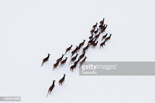Foto aerea di deer Mandria