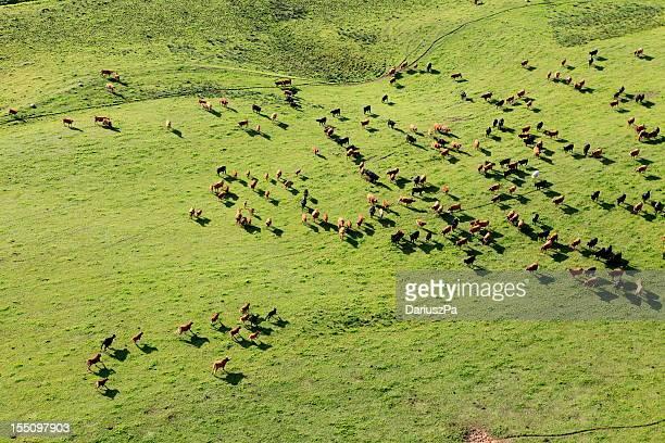 Aerial photo of farm animal