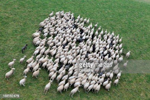 Foto aerea di fattoria animali