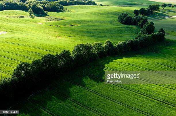 Aerial photo of green Farmland