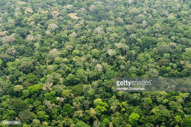 Bayanga Central African Republic March 16 Aerial photography of Rainforest in Dzanga National Park at triangle of Democratic Republic of the Congo...