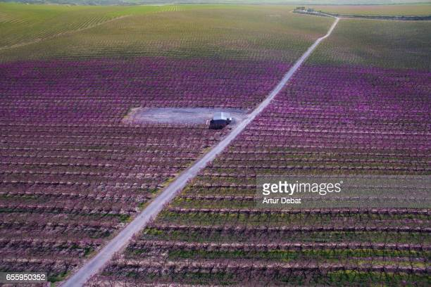 Aerial picture taken with drone of a beautiful long straight road crossing in diagonal  the beautiful blooming trees during spring time in the Catalonia countryside with stunning landscape.