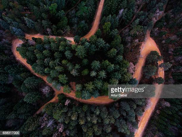 Aerial picture taking with drone flying over the beautiful tall fir trees with nice shape, colors and beautiful sinuous path in the Montseny nature reserve of Catalonia.