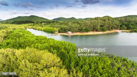 Aerial river and green mangrove forest