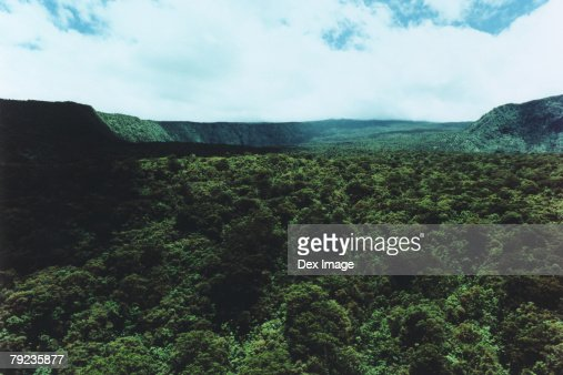 Aerial scenic of green forests, Maui, Hawaii : Stock Photo