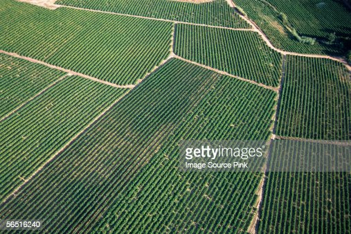 Aerial shot of a crop : Stock Photo