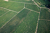 Aerial shot of a crop
