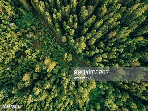 Aerial top view of summer green trees and road in forest in rural Finland. : Foto stock