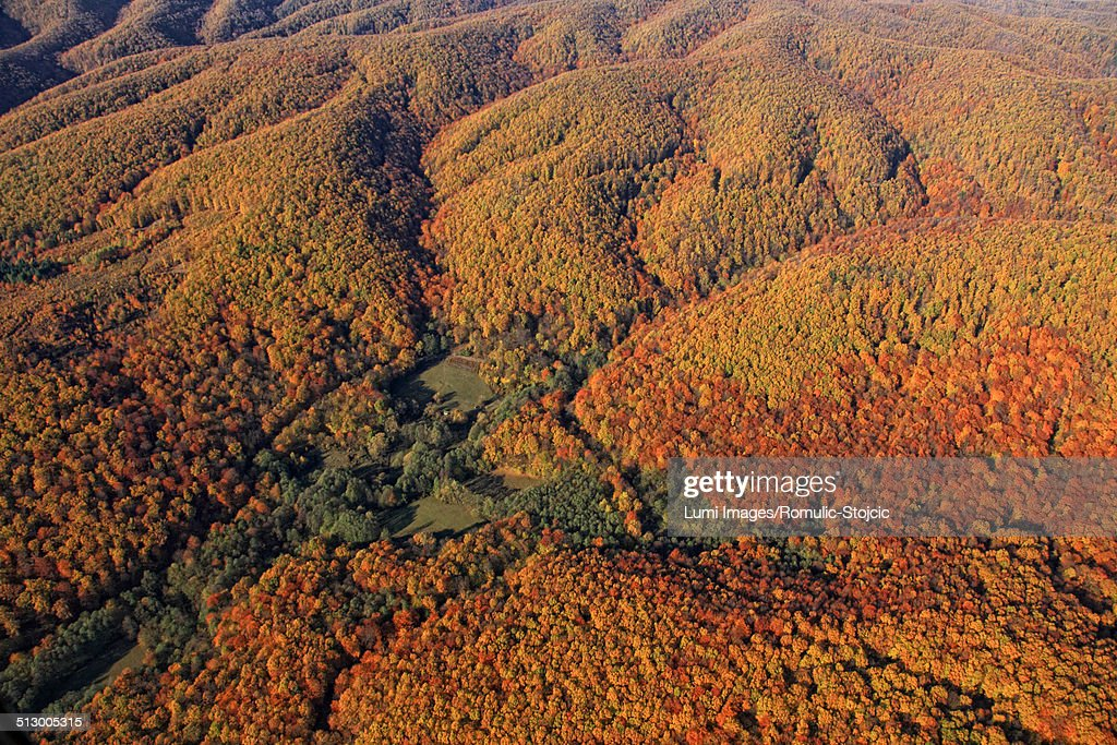Aerial view, autumn forest, Velebit mountain range, Croatia