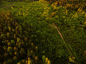 Aerial view of a colorful Bavarian forest at sunset in spring