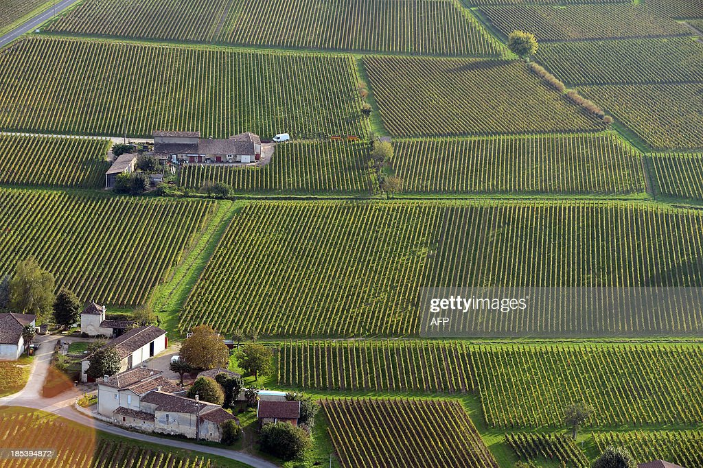Aerial view from a hot air balloon shows vineyards surrounding farms near the village of Saint Emilion on October 19, 2013. AFP PHOTO/ JEAN PIERRE MULLER