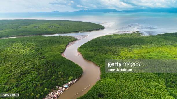 Aerial view mangrove forest in rainy season