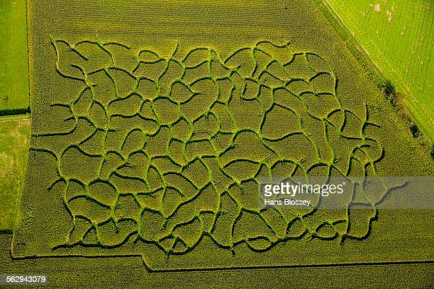 Aerial view, maze in a maize field near Bad Sassendorf, North Rhine-Westphalia, Germany