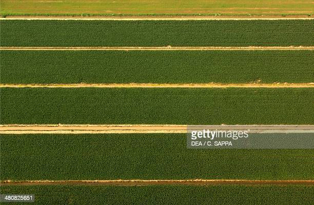 Aerial view of a cultivated area near Roncoferraro Province of Mantova Lombardy Region Italy