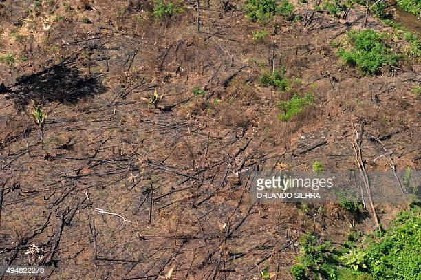 Aerial view of a deforested area in the Rio Platano biosphere reserve in La Mosquitia region Honduras taken on October 23 2015 Scores of military...