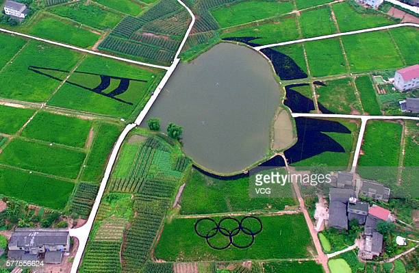 Aerial view of a huge torch pattern and the Olympic rings pattern which consist of colorful organic rice and a pond in a rice paddy at Dashi Village...