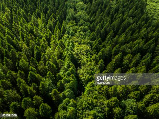 Aerial view of a pine forest, Roscommon, Ireland
