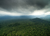 Aerial View of a Rainforest