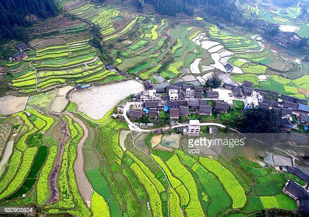 Aerial view of a rape flower field at Rongjiang County on January 28 2017 in Qiandongnan Miao and Dong Autonomous Prefecture Guizhou Province of...