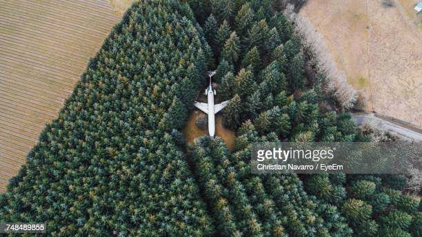 Aerial View Of Abandoned Airplane Amidst Trees