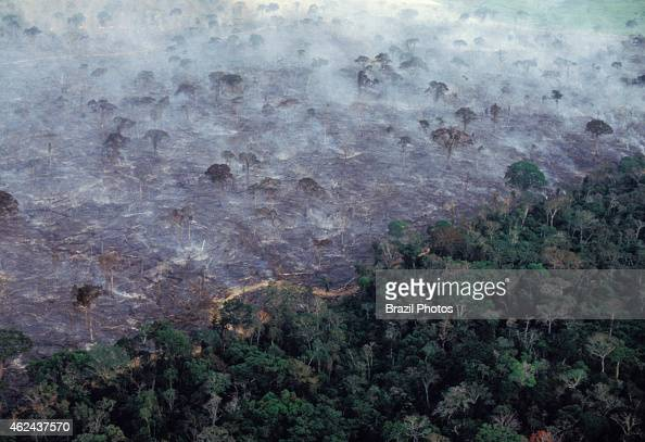 Aerial view of Amazon rainforest burning farm management with deforestation