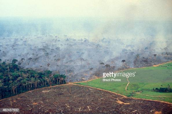 Aerial view of Amazon rainforest deforestation and farm management for livestock Photo shows four stages in land management on a big cattle farm in...