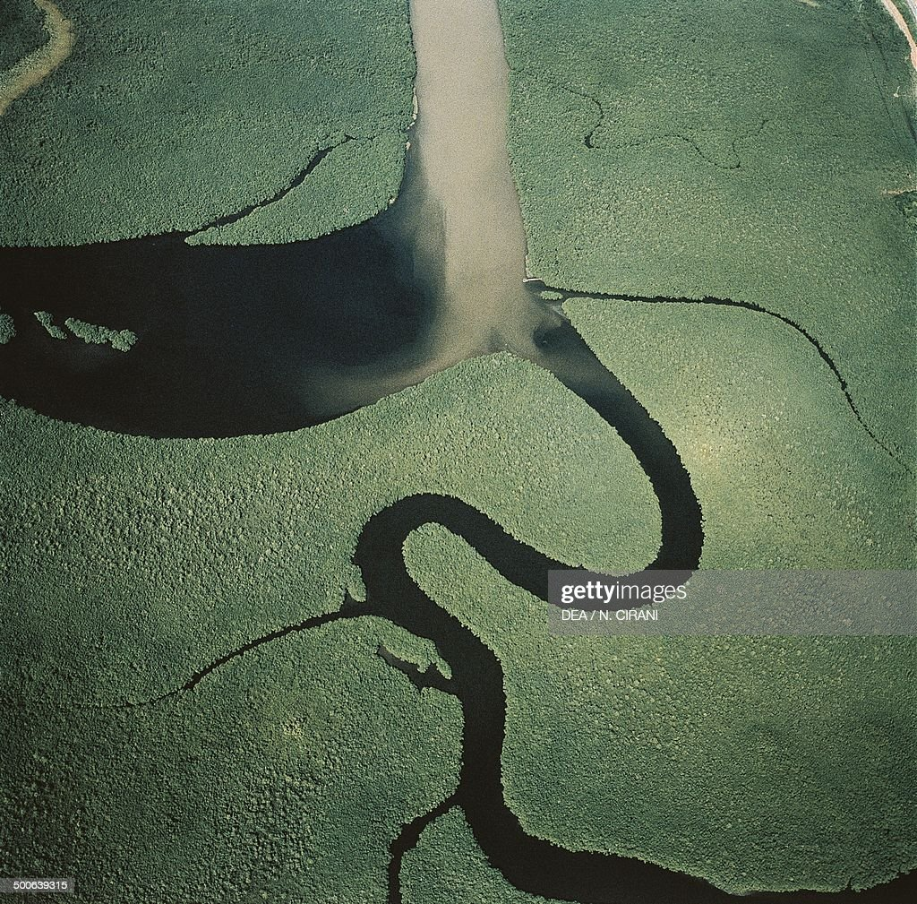 Aerial view of an Amazon River tributary Amazon rainforest Brazil