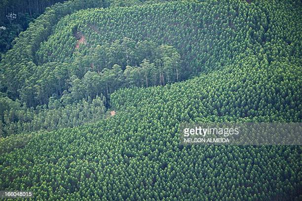 Aerial view of an eucalyptus field in Taubate some 130 km of Sao Paulo Brazil on April 4 2013 AFP PHOTO / Nelson ALMEIDA