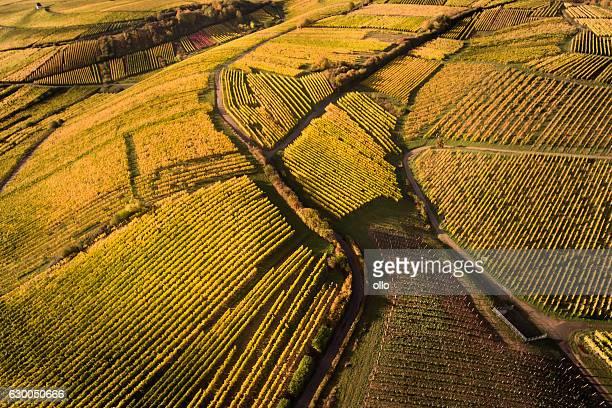Aerial view of autumnal vineyards