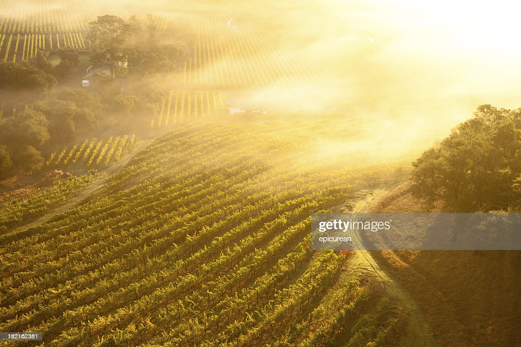 'Aerial view of beautiful vineyards in Napa Valley, California'