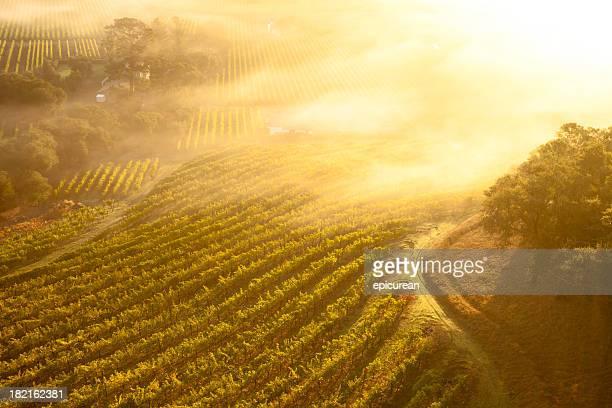 Aerial view of beautiful vineyards in Napa Valley, California