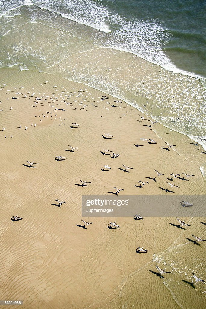 Aerial view of birds on beach : Stock Photo