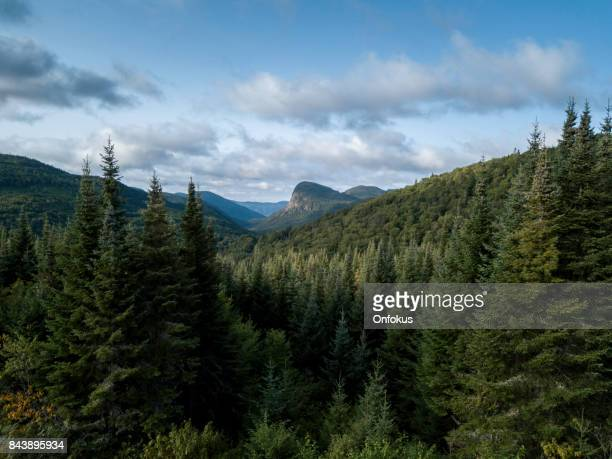 Aerial View of Boreal Nature Forest and Mountain in Summer