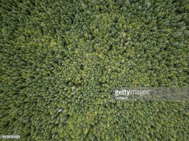 Aerial View of Boreal Nature Forest in Summer