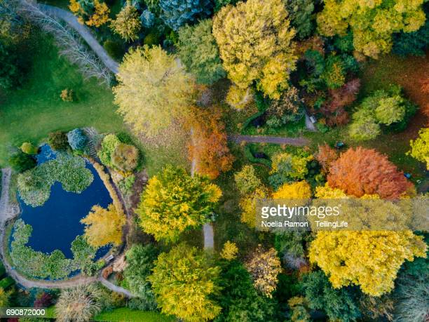 Aerial view of colorful Autumn trees and a lake