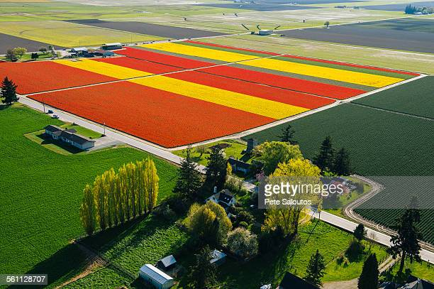 Aerial view of colorful tulip fields and trees
