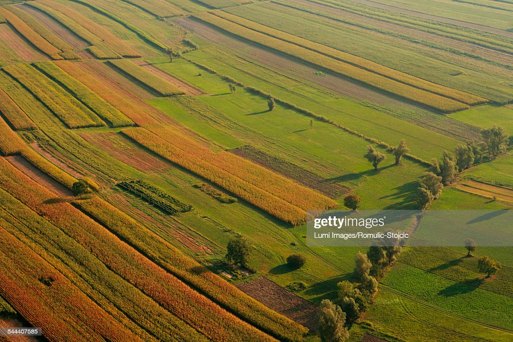 Aerial view of corn fields, Croatia