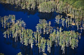 Aerial view of flooded cypress forest