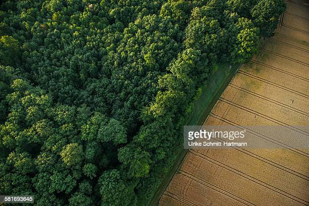 Aerial view of forest and corn field