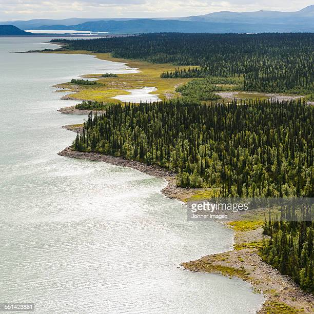 Aerial view of forest at water