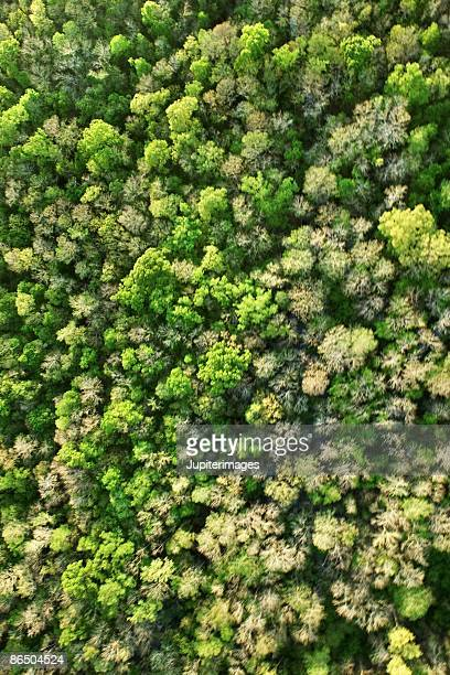 Aerial view of forest treetops