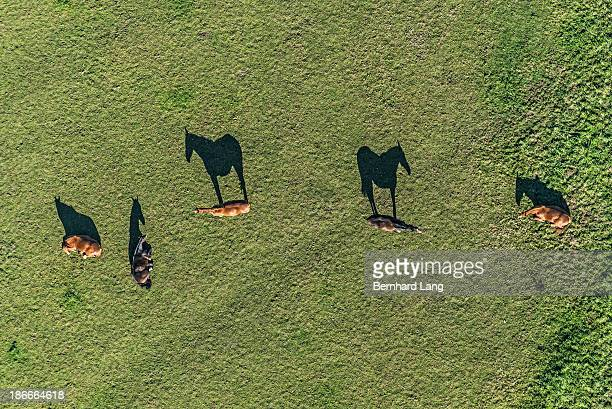 Aerial view of four horses on meadow