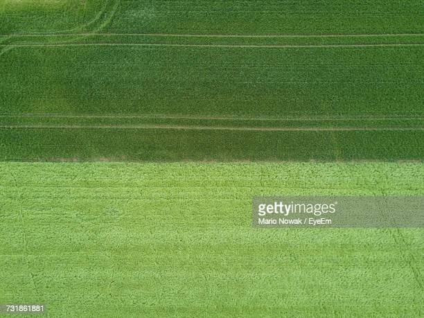 Aerial View Of Grassy Field