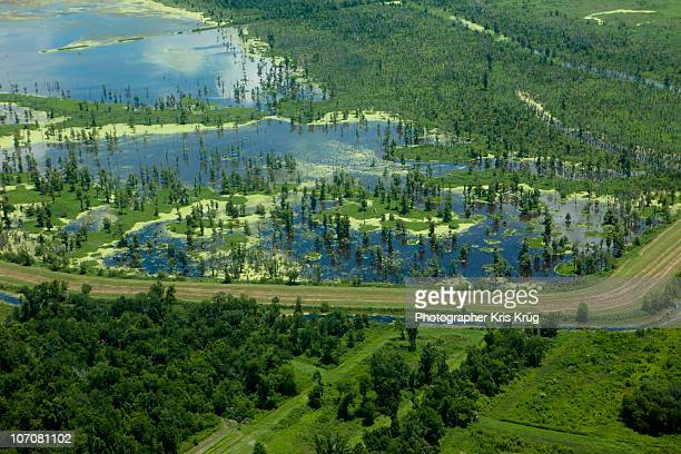 Aerial View of Green Southern Louisiana Marshlands