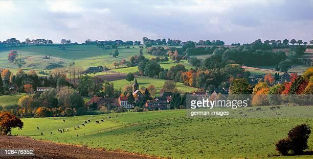 Aerial view of herd of cows in field