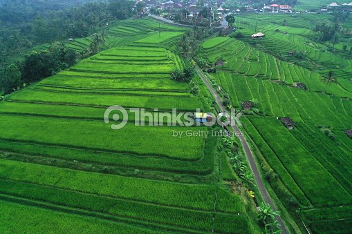 Aerial View Of Jatiluwih Rice Terraces In The Fog And Clouds