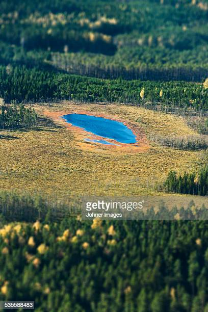 Aerial view of lake surrounded by forest
