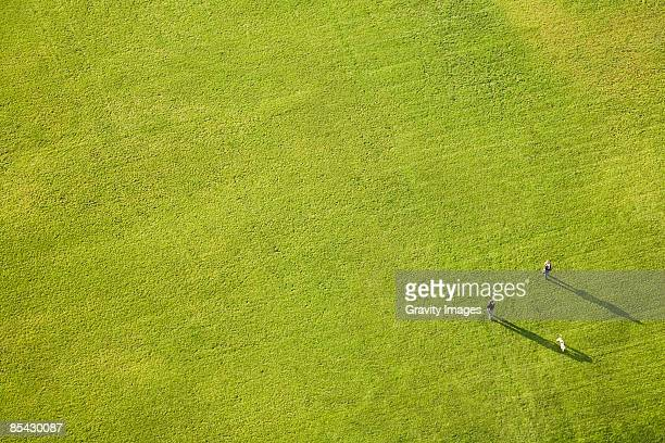 Aerial view of large green lawn, people and dog
