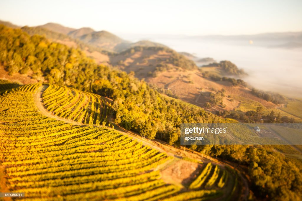'Aerial view of Napa Valley, California at sunrise'